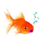 Denise the goldfish from Mistakes Were Made